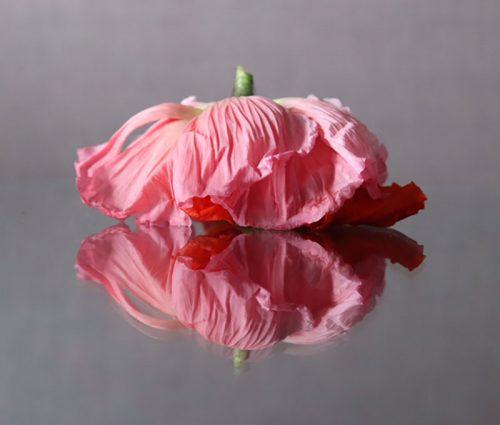 Carlo Golin / Photography